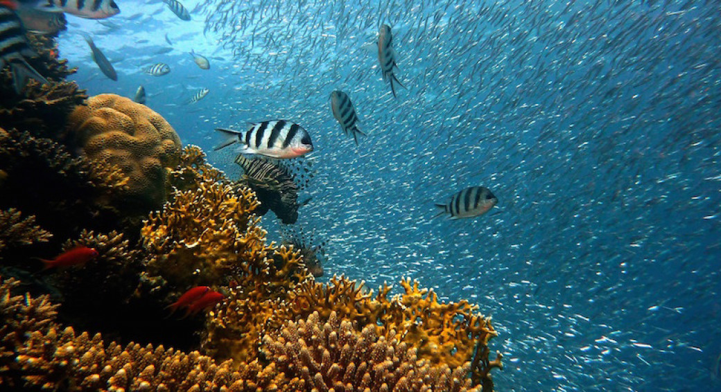 Great Barrier Reef printen koraal