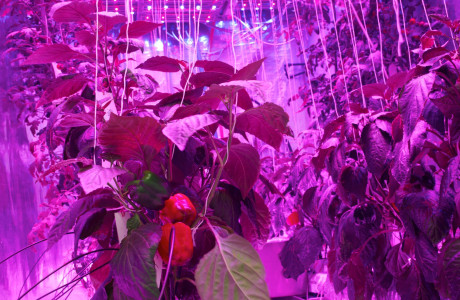 PlantLab verticale landbouw vertical farming future food