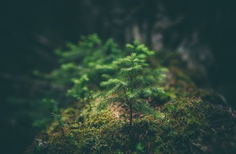 Wildernis in de stad met Tiny Forests