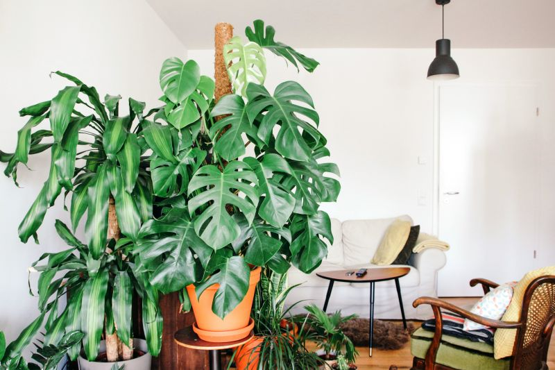 Monstera en drakenbloedboom